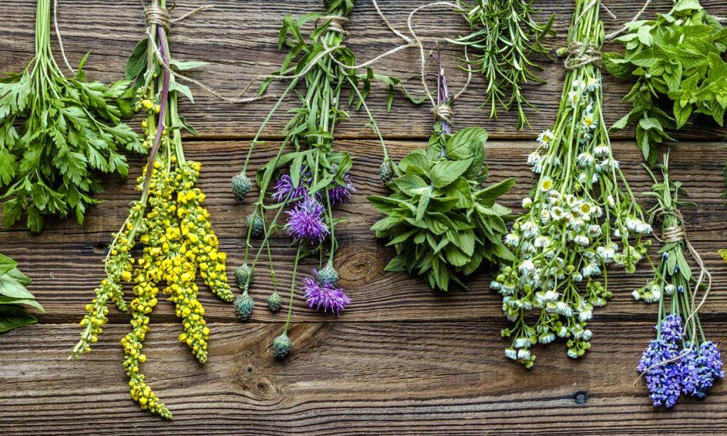 Plantas medicinales sin efectos secundarios